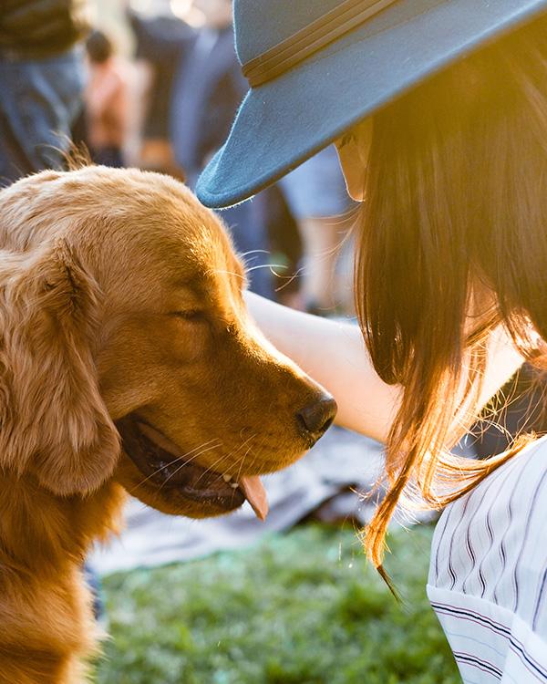 finansiering dyrlege, omsorg for hund