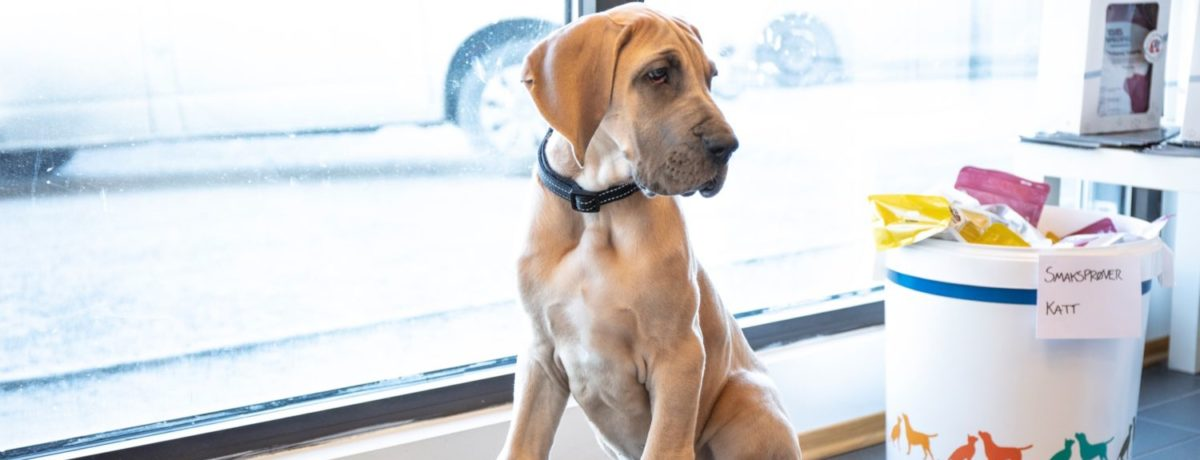 Hund på besøk hos Hamar Dyreklinikk