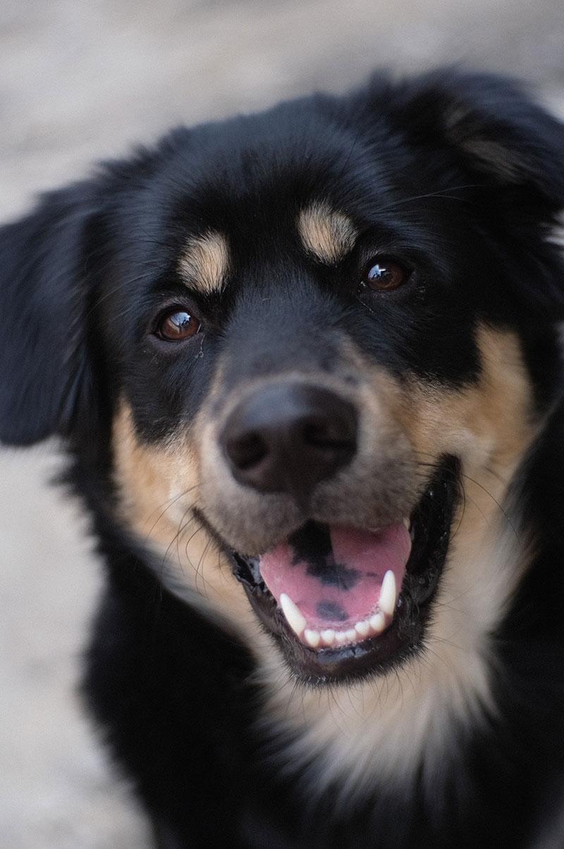 hund med friske tenner